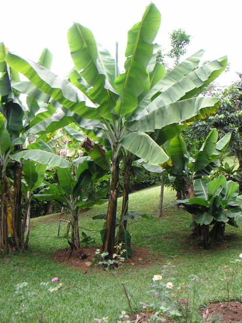 Jardinier paysagiste et am nagement jardin bouc bel air for Jardinier entretien jardin